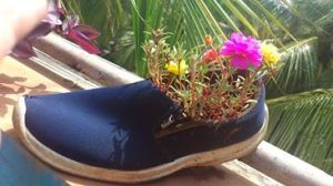 POrtulacas in shoes